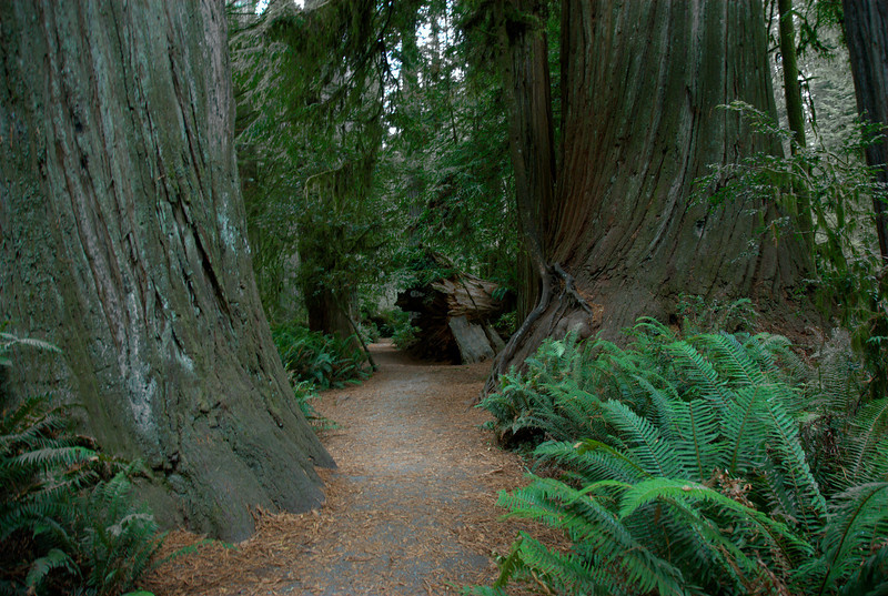 Hiking trail in Redwood National Park in California