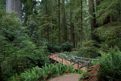 A bridge surrounded by lush greenery in Redwood National Park