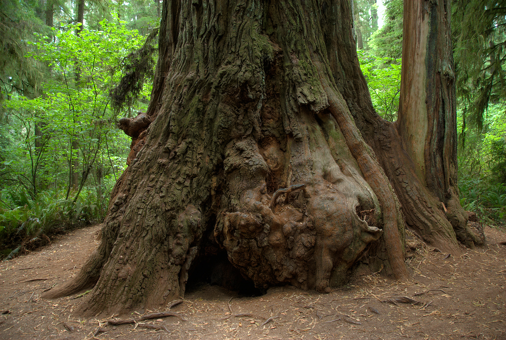North American National Park #9: Redwood National Park, California