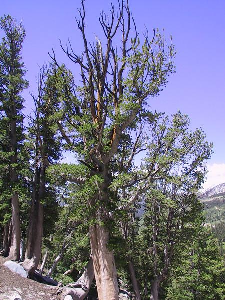 Tahoe2003