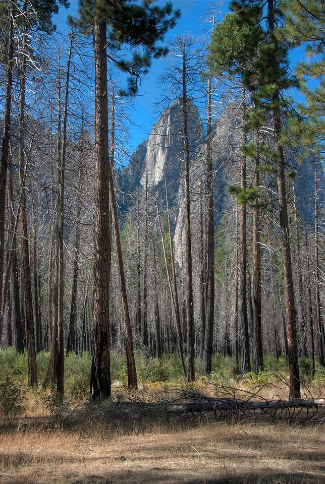 View of El Capitan from afar in Yosemite National Park in California