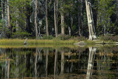 Swamp area of Yosemite National Park in California