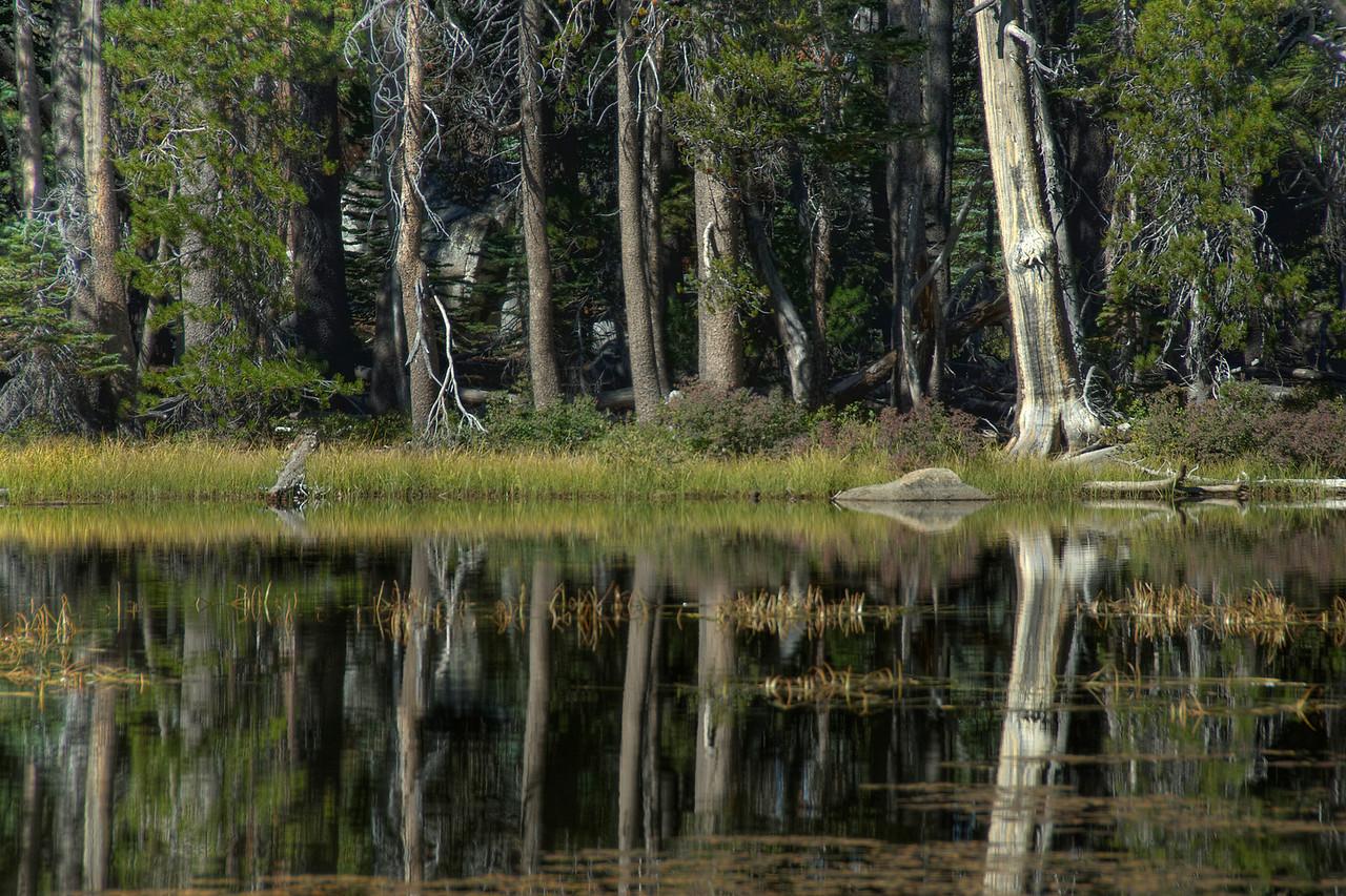 Swamp area of Yosemite National Park in California
