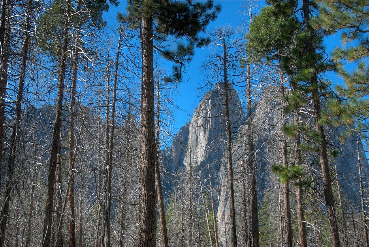 View of El Capitan through canopy in Yosemite National Park in California