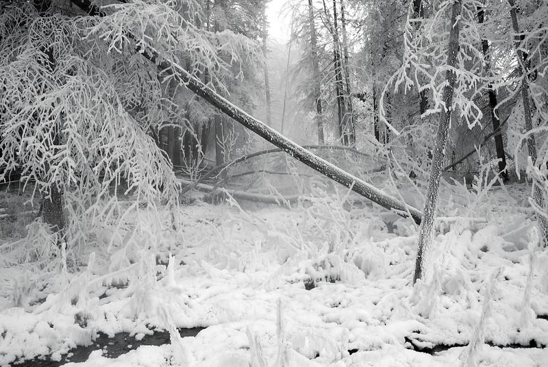 Frosty Banff Morning
