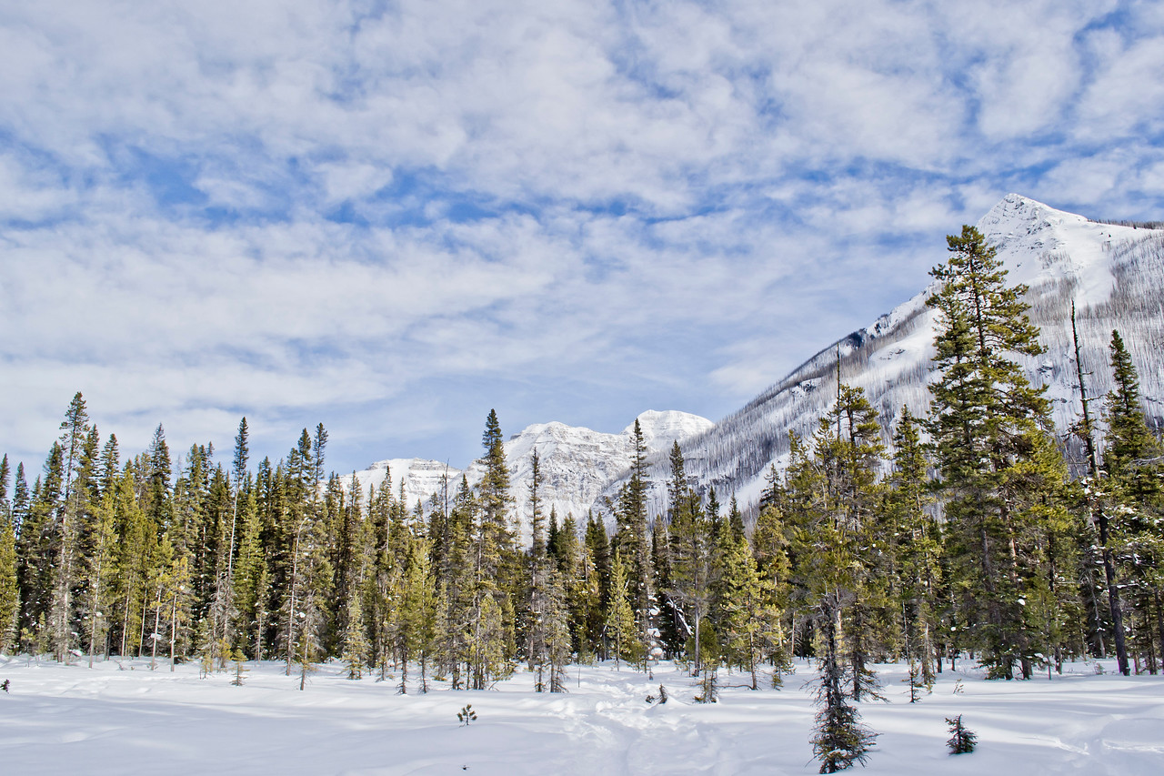 Snowshoeing with Discover Banff Tours