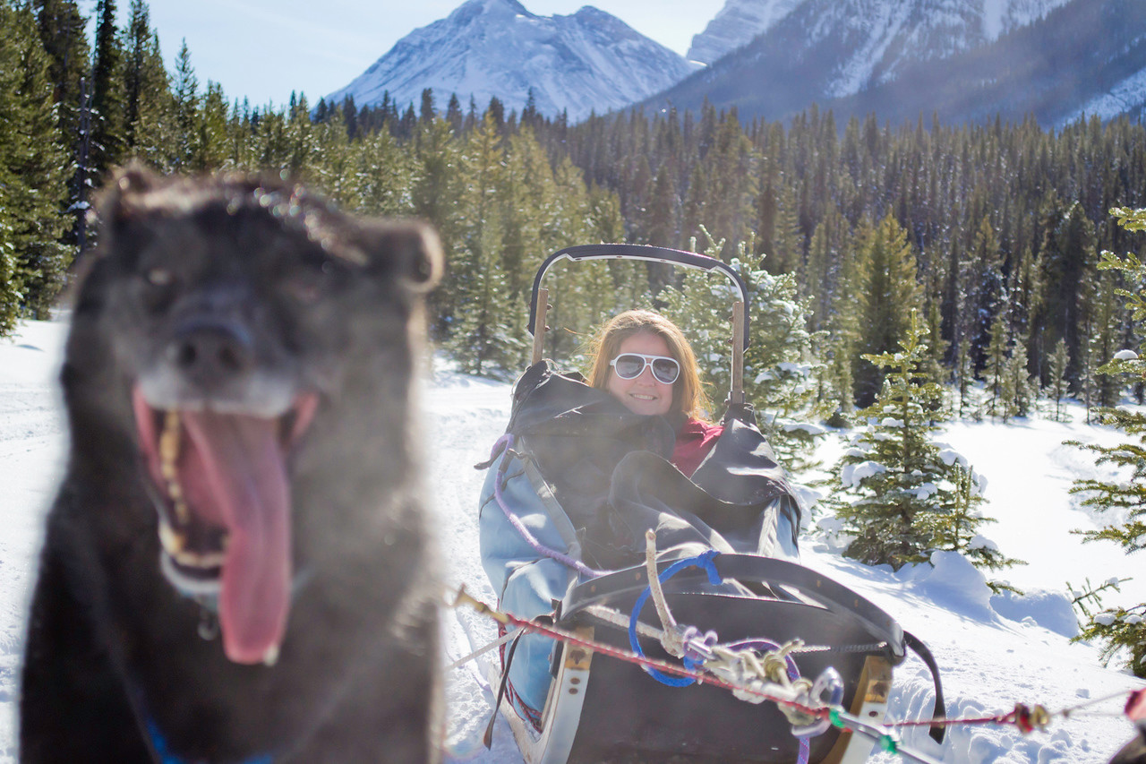 Dog sledding in Lake Louise