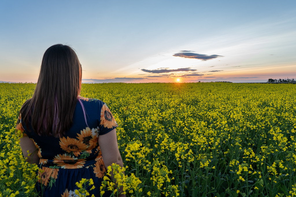 Girl standing in an Alberta canola field at sunset