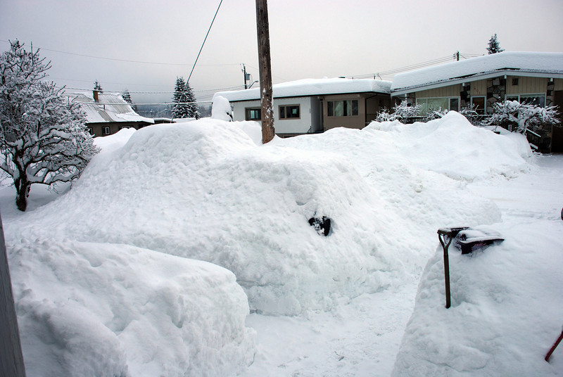 Ms Emilie's front yard .... where'd we leave the truck last night?