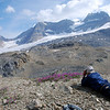 Dr. Thorsell photographed the wild flowers overlooking the icefields