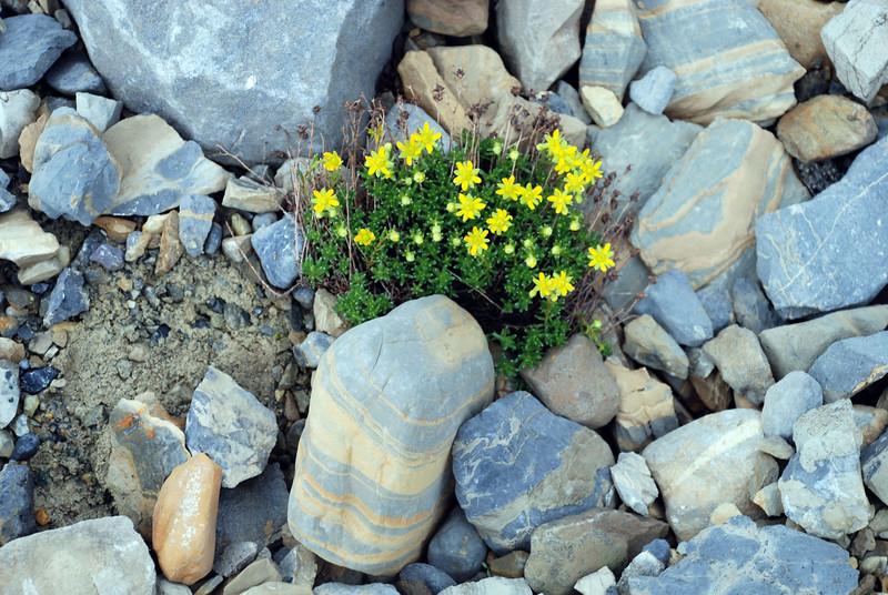 wildflowers in full bloom