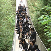 Japanese group on Capilano Suspension Bridge