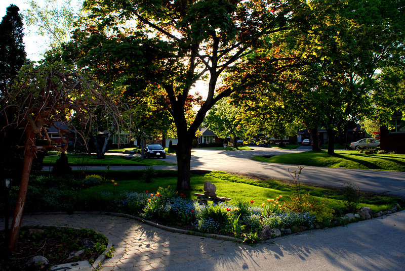 tree lined court