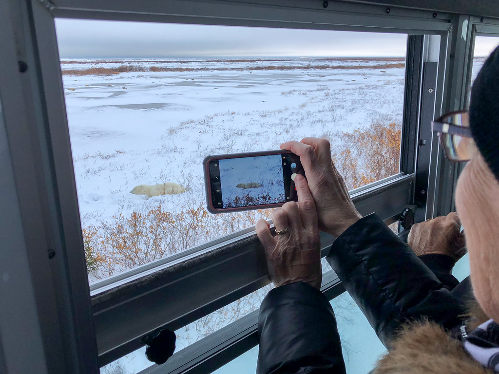 Polar bear watching in Manitoba