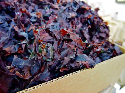 Dulse at the Saint John City Market