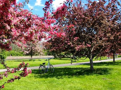 Ottawa in the spring