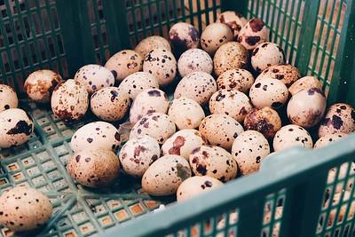 Quail eggs at Marché du Vieux-Port
