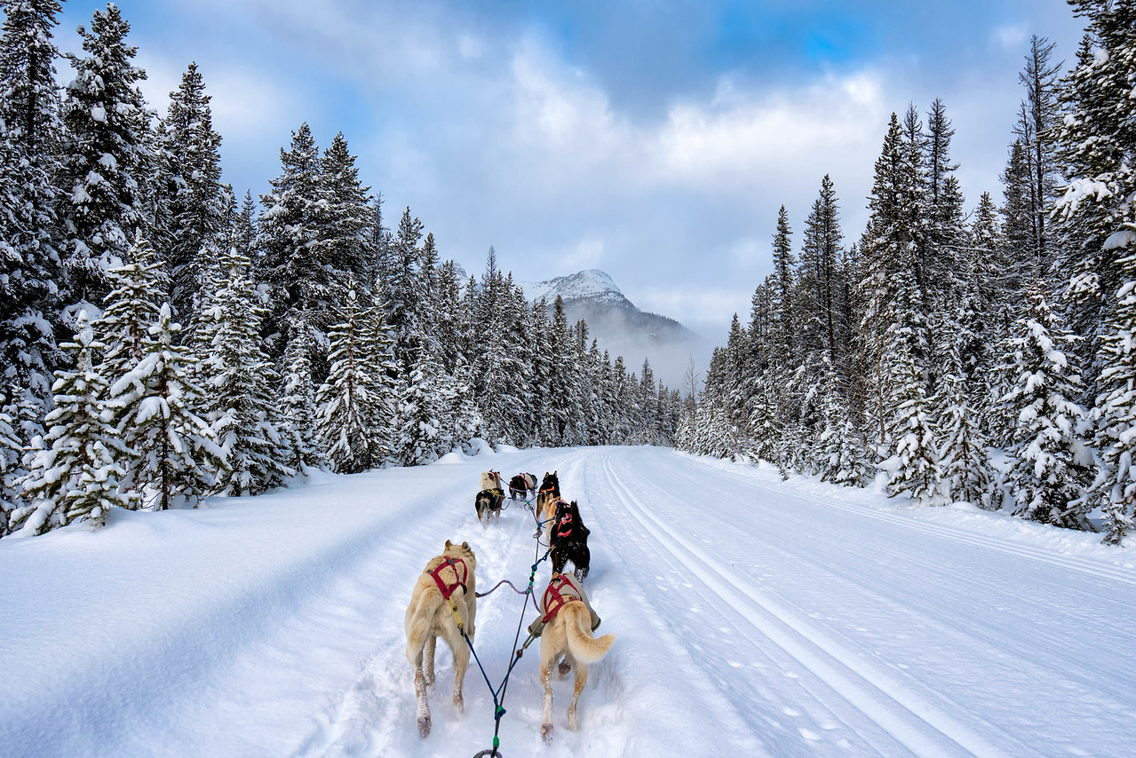 The Best Place To Go Dog Sledding In Banff National Park - The best sledding hills in north america