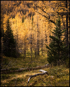 Larch Valley trail