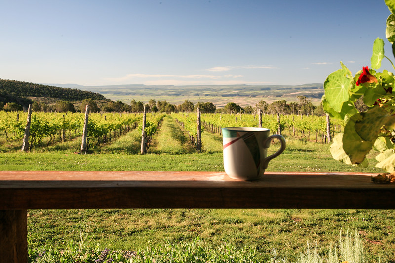 A cup sits on a railing with a vineyard in the distance.