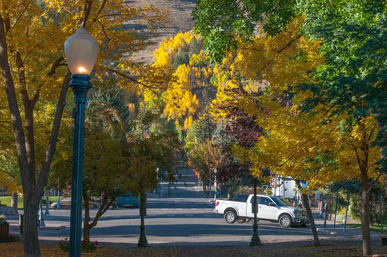 Autumn trees in Aspen, Colorado