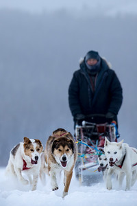 But everyone who went would tell you the dog sledding  was exciting and the views were fantastic