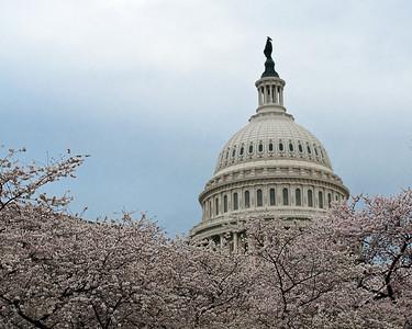 United States Capitol - Cherry Blossom Festival 2010