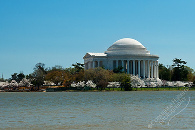 Jefferson Memorial - Cherry Blossom Festival 2010