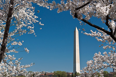 Washington Monument - Cherry Blossom Festival 2010