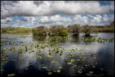 Anhinga trail, Everglades