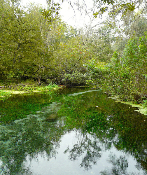 Kayaking down the Ichetucknee