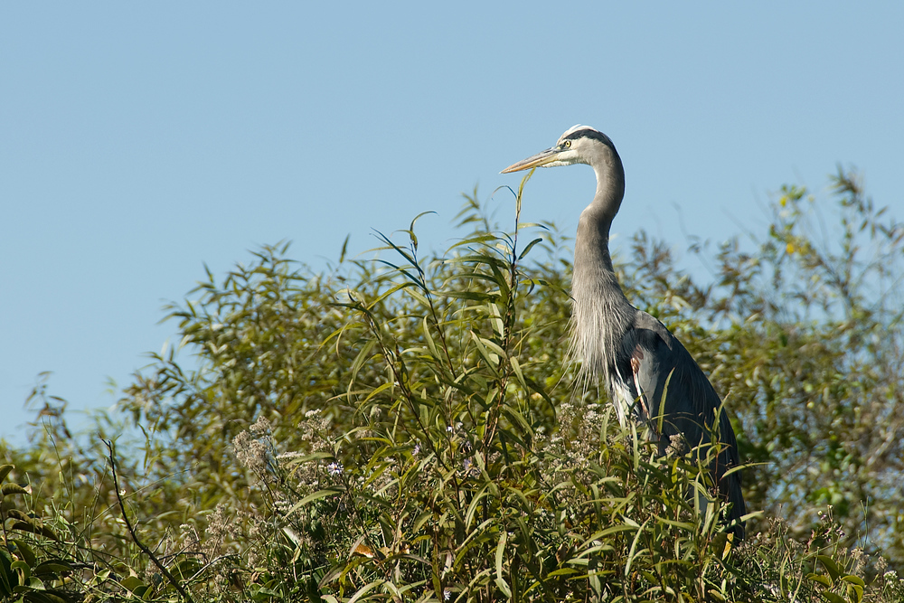 Bird in tree, Everglades National Park, Florida