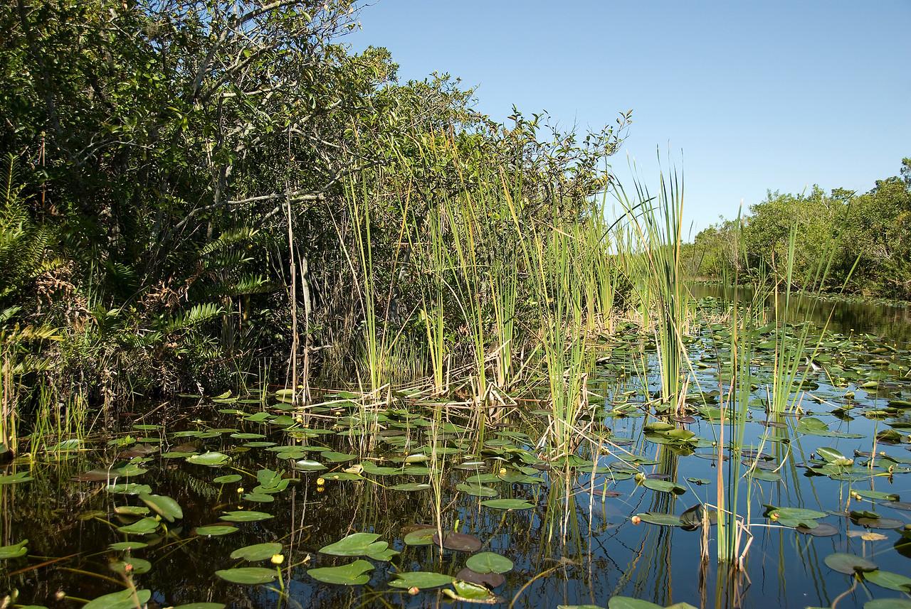 Swamp inside Everglades National Park, Florida