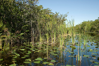 Swamp inside Everglades National Park, Florida