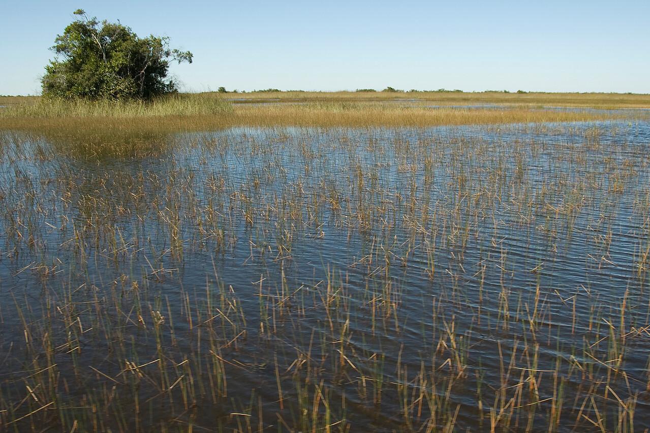 Swamp in Everglades National Park, Florida