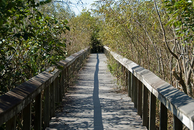 Wooden bridge inside Everglades National Park, Florida