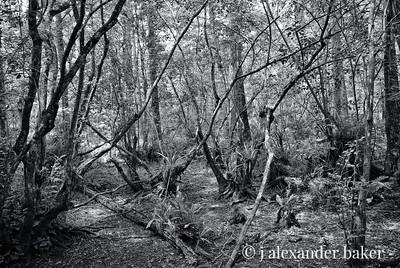 Cyprus Swamp, Dry Season