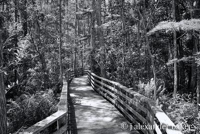 Swamp walkway, Naples, FL