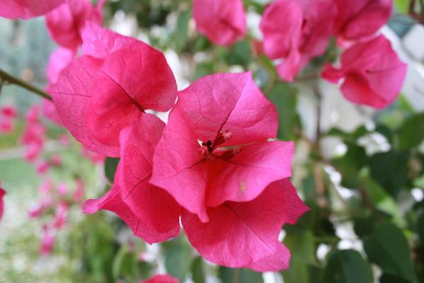 Flowers in the U.S.