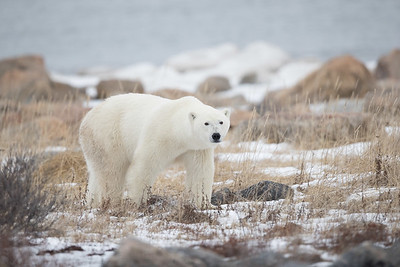 But it really is the polar bears one goes to see.  However, its see and be seen!