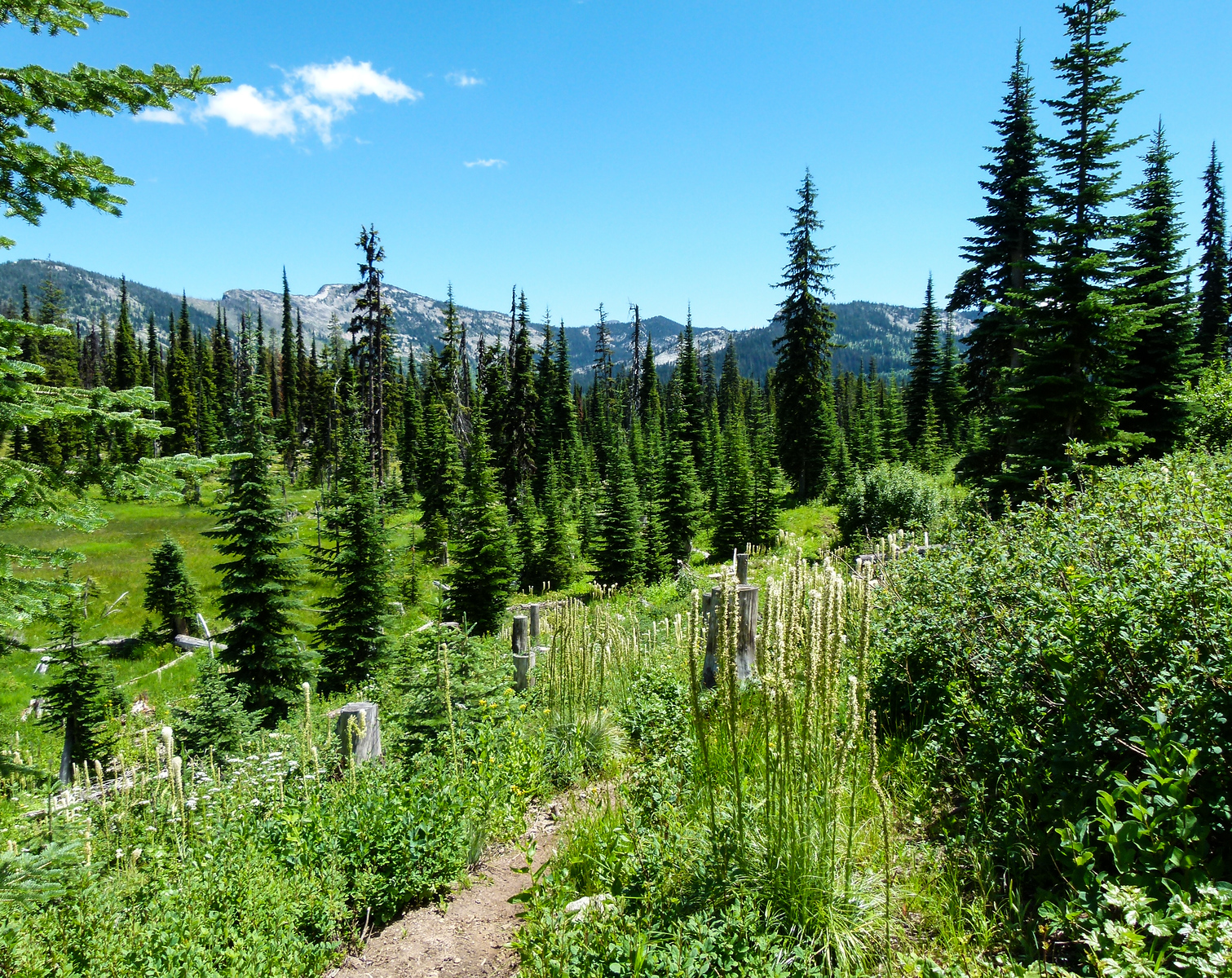 Skookum Butte Trail surrounded by the alpine scenery of the Lolo National Forest