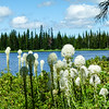 Bear grass on Lily Lake, Idaho