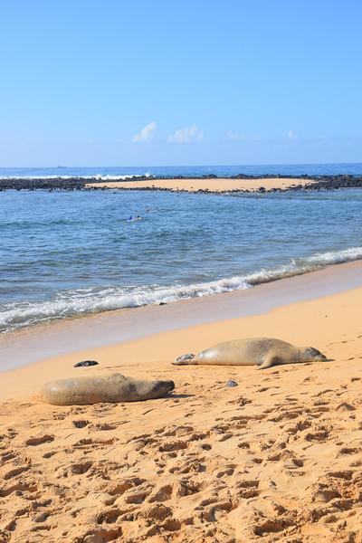 Sea lions asleep on Poipu Beach