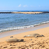 Sea lions asleep on Poipu Beach