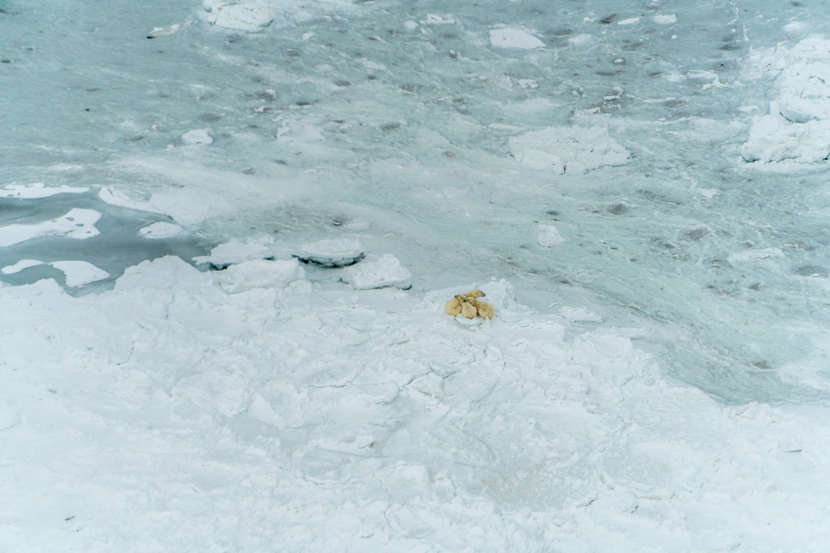 Aerial photos of polar bears
