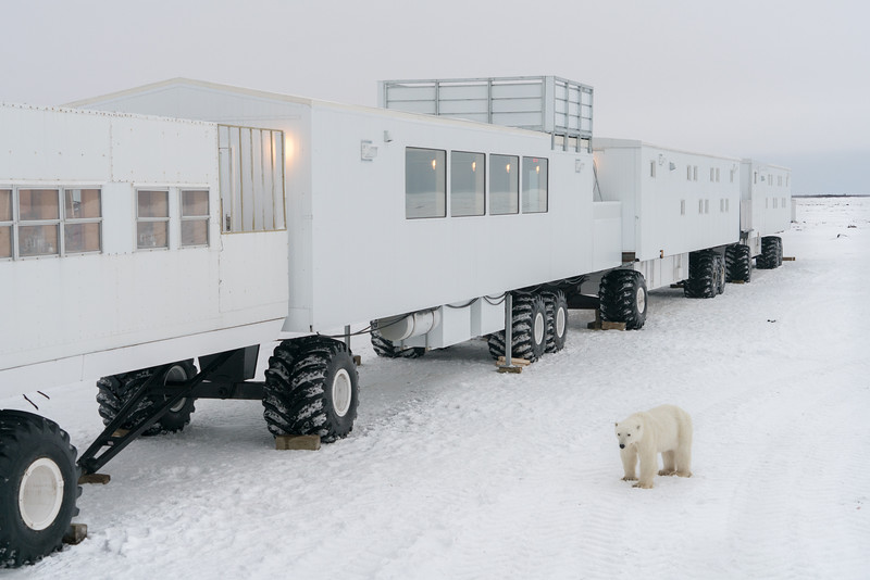 The Tundra Buggy Lodge set up in Wapusk National Park
