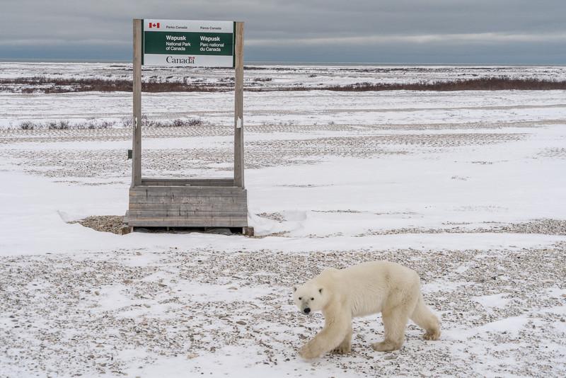 Wapusk National Park, Canada