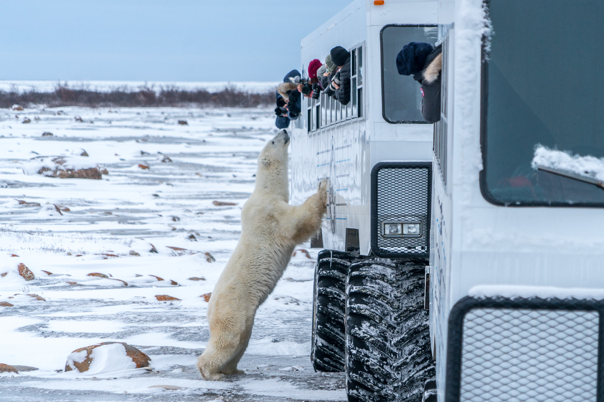 A polar bear showing some buggy love
