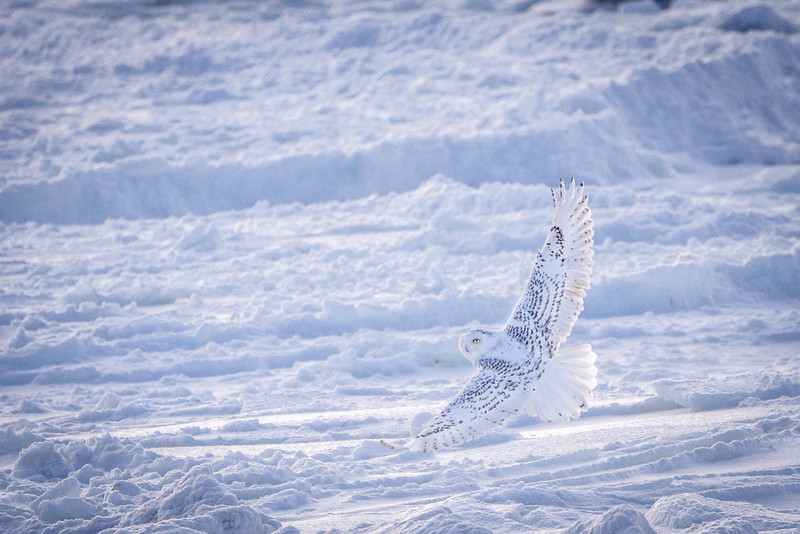 There is more than just polar bears in Wapusk National Park