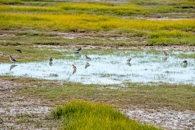 Birds on a swamp near Hudson Bay in Manitoba, Canada